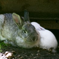 The rabbit tale or the sad and happy story of unusual friendships
